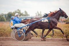 Springa för travaaveln för hästar Arkivfoton