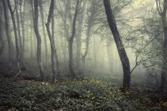 Springa forest in fog. Beautiful natural landscape. Vintage styl Stock Photography