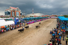 Springa för festivalbuffel Royaltyfria Bilder