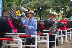 Springa för festivalbuffel Royaltyfri Bild