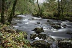 Springa omkring i vilt tillstånd för flod royaltyfri fotografi
