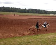 springa två ryttare på hästrygg arkivbild