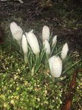 Springblooming Стоковое фото RF