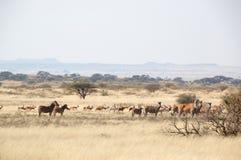 Wild lebende Tiere an einem Spielbauernhof in Südafrika Stockfoto