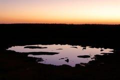 springbok Royaltyfria Foton