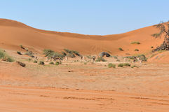 Springbok between dunes near Sossusvlei Stock Images