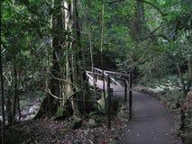 Springbrook Nationaal Park Royalty-vrije Stock Afbeeldingen