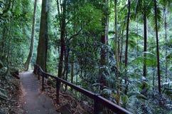 Springbrook Nationaal Park - Queensland Australië Stock Afbeeldingen