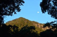 Springbrook Nationaal Park - Queensland Australië Royalty-vrije Stock Fotografie