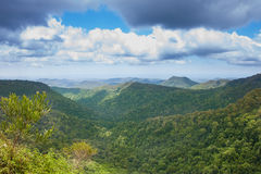 Springbrook national park, Australia Royalty Free Stock Photos