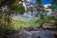 Springbrook national park, Australia stock photography