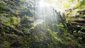 Springbrook National Park Royalty Free Stock Photography