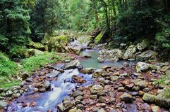 Springbrook National Park Royalty Free Stock Image
