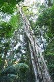 Springbrook National Park - Queensland Australia stock image
