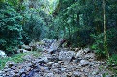 Springbrook National Park - Queensland Australia stock photo