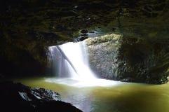 Springbrook nationalpark Royaltyfri Foto