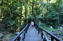 Springbrook nationalpark - Queensland Australien Arkivbilder
