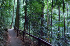 Springbrook nationalpark - Queensland Australien arkivbilder