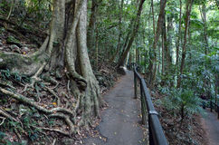 Springbrook nationalpark - Queensland Australien arkivfoton