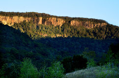 Springbrook nationalpark - Queensland Australien Royaltyfri Fotografi