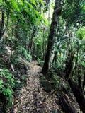 Springbrook Park rainforest in Australia. Trekking circuit stock photos