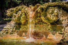 Springbrunn av korallen Arkivbilder