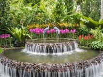 Springbrunn i orkidéträdgården royaltyfri bild