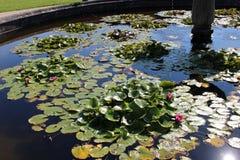 Springbrunn med näckrors Royaltyfria Bilder