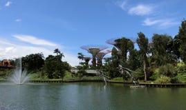 Springbrunn och de toppna träden Royaltyfri Foto