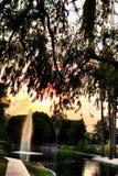 SPRINGBRUNN SUNNYVALE KALIFORNIEN Royaltyfria Bilder