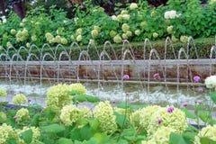 Springbrunnen på bakgrunden av vita blommor i staden parkerar arkivbilder