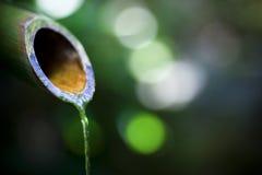 springbrunnjapan Royaltyfri Foto