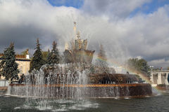 Springbrunnstenblomma Royaltyfri Bild
