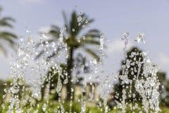 Springbrunnvatten som frysas med palmträd Royaltyfri Fotografi