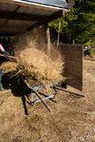 Springclean for the sheeps. Springcleaning the hay away for the sheeps Stock Image