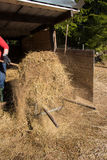 Springclean for the sheeps. Springcleaning the hay away for the sheeps Stock Photo