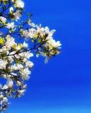 Springcollection στοκ εικόνες