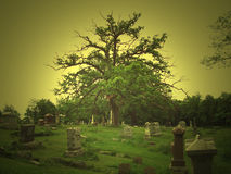 Springdale Tree. A tree in Springdale Cemetery, Peoria, Illinois stock image