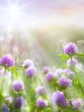 Bloeit de de lente natuurlijke achtergrond van de kunst, wilde klaver Royalty-vrije Stock Foto