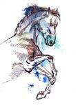 Springen des Pferds Stockbilder