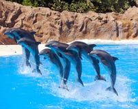Springen mit acht Delphinen Lizenzfreie Stockfotografie