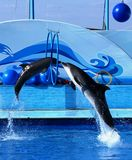 Springen mit zwei Delphinen Lizenzfreies Stockbild