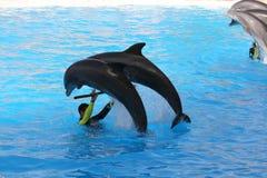 Springen mit zwei Delphinen Stockbild