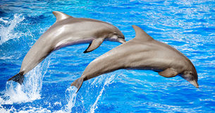 Springen mit zwei Delphinen Stockfotografie