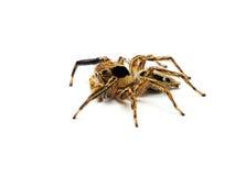 Springend spin die op witte achtergrond wordt geïsoleerdd stock foto's