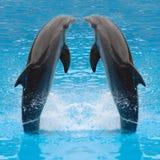 Springende Delphinzwillinge Stockfoto