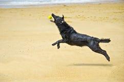 Springende hond stock foto