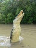 Springende krokodil dichtbij Darwin, Australië Royalty-vrije Stock Afbeeldingen