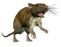 Springende Ratte stock abbildung