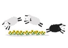 Springende Schafe mit Farbhintergrund Stockfotografie
